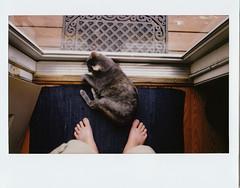Bathing In The Doorway (Brock5604) Tags: door pet feet cat polaroid foot fuji floor kitty mat rug instax