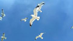 The Seagulls of Suomenlinna #Nokia808PureView (Ms. Jen) Tags: cameraphone camera seagulls finland moblog island nokia helsinki phone msjen suomenlinna seafortress blackphoebecom photobyjenhanen nokiabelle nokia808 nokia808pureview nokiapureview808