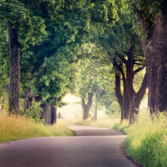 Sign (warmianaturalnie) Tags: road morning trees tree sign square landscape alley poland curve warmia