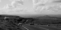 Croesi (Rhisiart Hincks) Tags: blackandwhite bw blancoynegro wales clouds view sheep cymru gales nuages moutons powys blancinegre galles llangorse defaid cymylau blancetnoir golygfa crossingtheroad hodeiak duagwyn brycheiniog kembre zwartenwit walia paysdegalles anbhreatainbheag galesherria ardiak koumoul velsa kimrio zuribeltz feketefehér kembra ウェールズ dubhagusbán gwennhadu siyahvebeyaz velsas 威爾士 breconshire черноеибелое sgòthan juodairbalta ουαλία ويلز уэльс caoraich černáabílá велс уелс уельс mustajavalkoinen deñved чорнийібілий crnoibelo melnsunbalts llynsafaddan mynydllangynidr treuziñanhent croesirffordd negrușialb a'chuimrigh dubhagusgeal uells ওয়েলসের اسودوابيض، črnoinbelo 黒と白、黑与白,schwarzundweis વેલ્સ