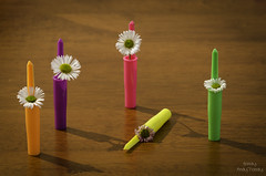 Flowers in Pen Lids (Handy Andy Pandy) Tags: flowers summer vacation portrait