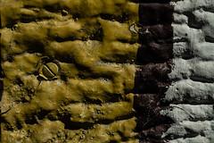 Surface texture (Daniel Kulinski) Tags: macro lens europe image daniel creative picture samsung poland getty 60mm 1977 photograhy nx kulinski nx20 samsungnx samsungimaging danielkulinski samsungnx60mmf28 samsungnx20