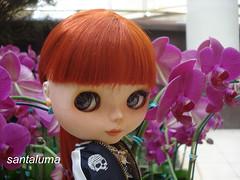 Amei essas flores, diz Aisha!!