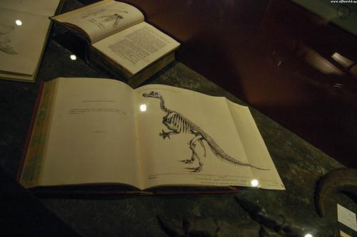 Dollo's Studies on Iguanodon
