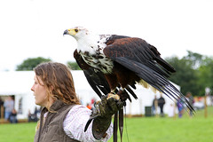 "IMG_5106aw (FlyingV99) Tags: school bird hall flying suffolk eagle display country fair owl falcon 2012 talons prey"" ""birds heveningham ""english falconry"""