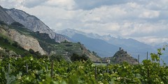 saillon7 (bulbocode909) Tags: suisse tours valais ruines saillon