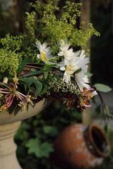Summer Bouquet. (annicariad) Tags: flowers wales garden cymru notraining annicariad oooopsitisnow
