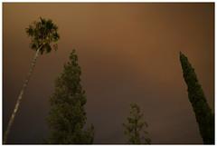 LA 73 (misu_1975) Tags: smoke la leica mp m240 summicron 35mm street palmtree orange losangeles sky