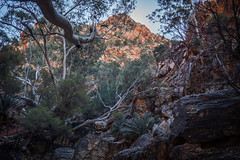 MacDonnell Ranges Stanley Chasm Northern Territory-5