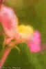 """""""I postpone death by living, by suffering, by error, by risking, by giving, by losing."""" ―Anais Nin (Kitsanne) Tags: nikon d80 lensbaby composerpro softoptic kenkoextension topazimpression painted flowers wildflowers pink"""