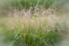 100 x  2016 Photos with the Lensbaby 55/100 (norasphotos4u) Tags: lensbaby flowersplants canon6d image55100 noraleonard 100xthe2016edition 100x2016