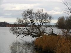 IMG_0984 (Gino Chnard) Tags: arbre automne eau fleuve montral parcnaturedelledelavisitation ville laval quebec canada