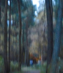 chinks of blue (Edinburgh Nette) Tags: icm woodland abstracts trees