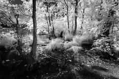 Herthasee (hansekiki ) Tags: rgen ostsee jasmund nationalpark landschaften infrared infrarot canon5d