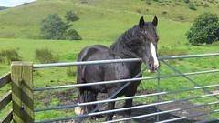 Black Horse, Heap Clough (mrrobertwade (wadey)) Tags: wadeyphotos mrrobertwade rossendale robertwade lancashire haslingden milltown