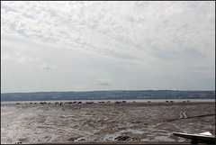West Kirby Wirral 230816 (4) (Liz Callan) Tags: westkirby wirral sea seaside beach rocks boats ben bordercollie dogs sky water waves buildings lizcallan lizcallanphotography