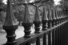 Boston Symmetry (Dan Elam) Tags: boston new england iron fence black white bw monochrome texture trees steele park