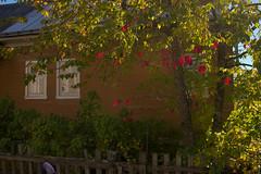 (engine9.ru) Tags:     homeliness mezen fence    plants autumn