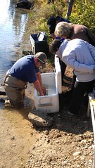 IDFG staff working on sockeye salmon reintroduction near Redfish Lake, Idaho (Pacific Fishery Management Council) Tags: idaho redfish sockeye hatchery fish angling salmon fisheries