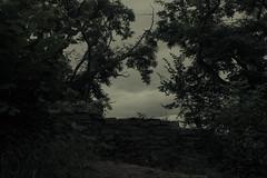 Concealed view (Netsrak) Tags: wall mauer tree trees baum bume gras grass sky himmel leaf leaves blatt bltter stein steine stone stones cloud clouds wolke wolken outdoor