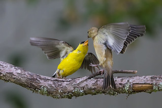 Get off my branch.