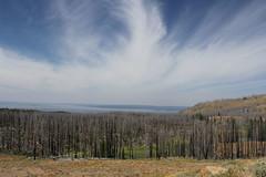 Day three; Cody Wyoming to Yellowstone National Park to Rigby Idaho. (kim mensinger) Tags: yellowstone national park cody wyoming elk waterfall bison norris old faithful geyser canyon buffalo bill dam