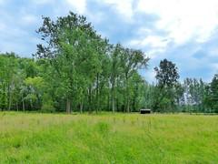 Landschap -(1)- Lede (Johnny Cooman) Tags: ledewanzele vlaanderen belgi lede bel belgium belgia belgien belgique blgica flandern flanders flandes flandre flhregion flemishregion  eastflanders oostvlaanderen aaa natuur panasonicdmcfz200 wolk wolken wolkformatie wolkformaties cloudscapes nuages boom arbre tree baum bos landschap landscape
