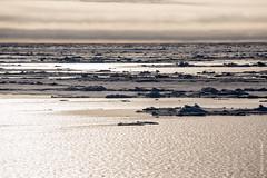 2016-08_Spitzbergen-734.jpg (roli.laesser) Tags: arktis reisen spitzbergen svalbard spitsbergen