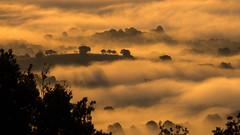 Morning Glory (macrobernd) Tags: sun rise sonnenaufgang toskana tuscany wolken clouds fog nebel morgennebel golden gegenlicht bume landschaft fuji landscape xt1 xc50230 italien italy morning fujixt1