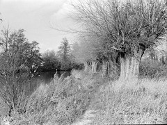 nr Stoke Lock, Guildford (Ron's travel site) Tags: flickrandroidapp:filter=none guildford england uk gb circa1988 filmcamera olympusom10 om10 35mm blackandwhite bw mono monochrome ronstravelsite wwwronsspotuk riverwey weynavigation trees pollard