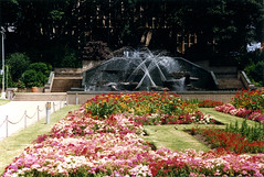 Civic Park Fountain, Newcastle, NSW, January 1989 (Coalfields Heritage Group) Tags: civicparkfountain fountains figtrees civicpark newcastlensw newcastle coalfieldsheritagegroup percysternbeckcollection nsw australia book22 sternbeckbk220189c008