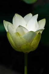 spring-bloom (johnl63) Tags: plantsandfungi