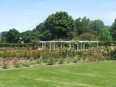 Kennedy Park Rose Garden