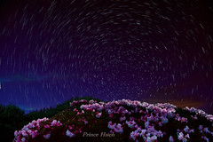 -  - Stars orbits + Taiwan Alpine Rhododendron - HeHuan Mountain (prince470701) Tags: taiwan   nantou    hehuanmountain starstrails tarokanationalpark taiwanalpinerhododendron sonya850 sony2470za starsorbits