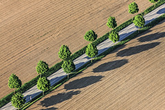 Line Of Trees (Aerial Photography) Tags: street trees by la row aerial line diagonal bume allee luftbild diagonale alignment leaftree luftaufnahme lineoftrees reihe oberotterbach ndb laubbaum strase deciduoustree baumreihe rowoftrees landstrase foliagetree fotoklausleidorfwwwleidorfde la37 rottenburgadlaaber deutschlandvonoben 14052012 1ds79231