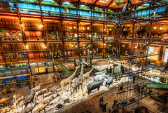 A Night at the Museum (Stuck in Customs) Tags: world city travel urban paris france nature animals seine architecture night digital french island photography blog high europe ledefrance republic dynamic stuck state district capital july exhibit science historic photoblog software processing western imaging migration northern ark region range metropolitan hdr tutorial trey travelblog customs vast nationalmuseumofnaturalhistory rpubliquefranaise 2011 ratcliff musumnationaldhistoirenaturelle rgionparisienne mnhn hdrtutorial stuckincustoms treyratcliff photographyblog stuckincustomscom nikond3x