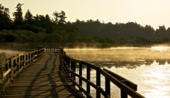 Morning at Swan Lake (Alejandro Erickson) Tags: morning bridge mist lake canada sunrise bc victoria swanlake goldenhour