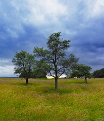 3 Trees (Sebastian.Schneider) Tags: sky cloud tree nature clouds germany landscape deutschland scenery skies hessen cloudy country natur himmel wolke wolken scene land landschaft baum wolkig ldk haiger lahndillkreis lahndill