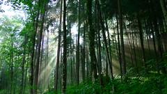 Lichtblick (Aah-Yeah) Tags: sun sunlight forest bayern wald sonnenstrahlen sunbeams achental chiemgau lichtblick