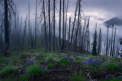 At the Crack of Dawn (arturstanisz1) Tags: park fog dawn britishcolumbia photgraphy manning workshops wildfires phototours arturstanisz
