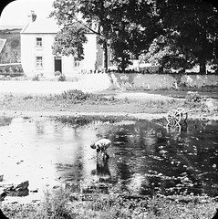 Man in river, dredging for pearls. House, cart, at Oughterard. (National Library of Ireland on The Commons) Tags: thomasholmesmason thomasmayne thomashmasonsonslimited lanternslides nationallibraryofireland oughterard pearlfishing river house countygalway owenriffriver uachtarard abhainnruibhe theriverriffriver