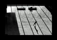 F_DSC1924-BW-Nik00E-Nikkor 20mm F28 D-May Lee  (May-margy) Tags:  maymargy bw               fdsc1924bw portrait silhouette benches glass wall floor streetviewphotographytaiwan linesformandlightandshadows facesinplaces naturalconcidencethrumylens taipeicity taiwan repofchina nikond800e nikkor20mmf28d maylee