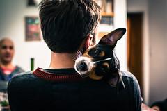 Ralph (Fotografia Ariel) Tags: dog mascotas mascota pet pets perro