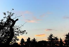 Sky (LamiaDeTenebris) Tags: baum tree nature natur leafs bltter sunset sonnenuntergang sky himmel wolken clouds