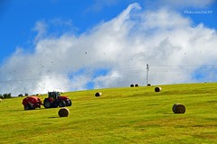 (Zak355) Tags: rothesay isleofbute bute scotland scottish farming masseyferguson tractors farm