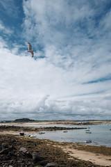 gabbiano (MoSe75) Tags: bretagna francia xt1 landscape seascape sea natura paesaggio oceano faro lighthouse colors