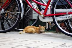 Today's Cat@2016-08-18 (masatsu) Tags: cat catspotting thebiggestgroupwithonlycats pentax mx1