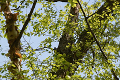 Goose Island county park (turn off your computer and go outside) Tags: 2016 countypark gooseisland lacrossecounty may wi wisconsin nature outdoors spring springtime sunnyday warm westernwisconsin