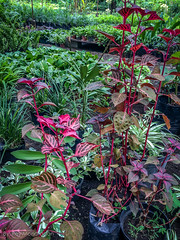 IMG_8914-13 (Reynaldo Mondragon) Tags: flowers gomez farias selvatic vegetation reymondragon