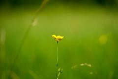 DSC01083.jpg (chagendo) Tags: pflanze makro makrofotografie sonyalpha7ii 90m28g outdoor